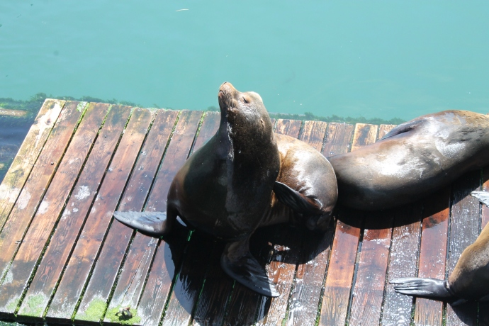 Seal in Newport OR
